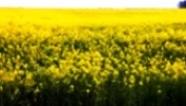Жовто— блакитна Україна